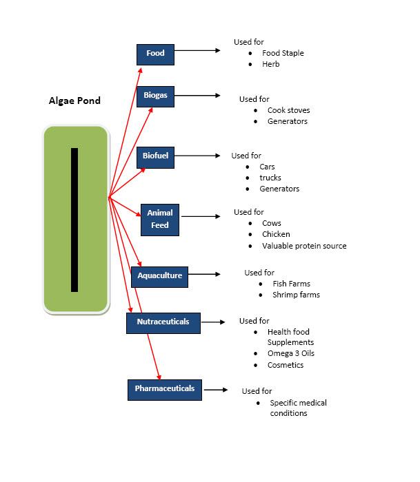 about algae