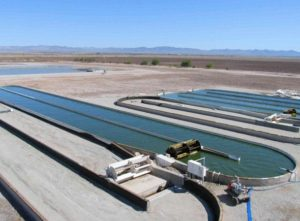 algae biofuel news