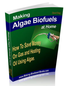 making algase biofuels at home