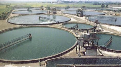 pond biofuels