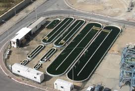 Algae for Small Scale Farms