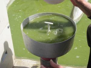 algae harvesting