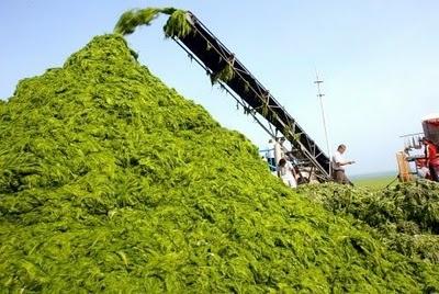 Algae for entrepreneurs