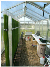 algae greenhouse