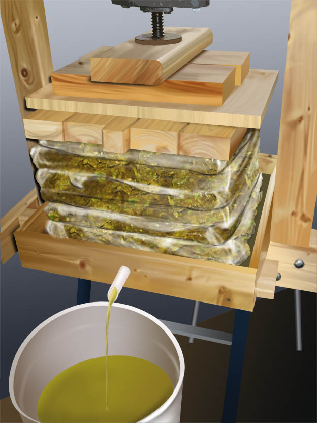 algae oil press