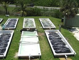 algae micro farming