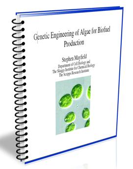 algae microfarms