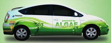 Algae powder