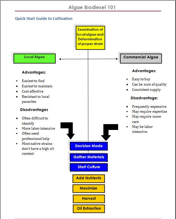 algae biodiesel process