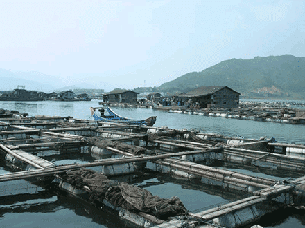 algae aquaculture