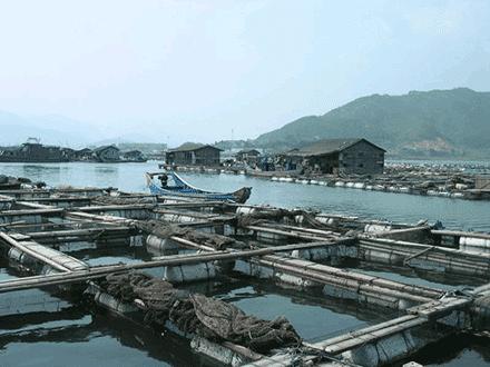 algae aquaculture