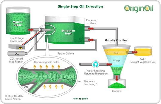 algae oil extraction
