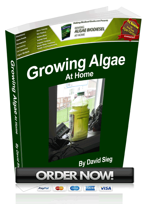growing algae at home