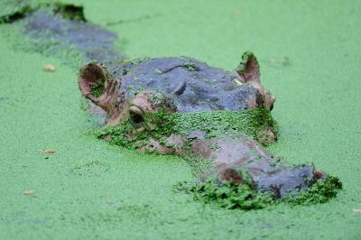 keeping open ponds free of invasive species